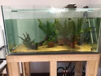 Large Aquarium (100 gallons/450 litres)