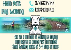 Hello Pets Dog Walking • Fully Insured • First Aid Trained • Small Walking Packs • Dog Walker