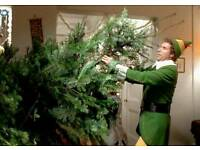 Real Christmas Trees/ Free Delivery