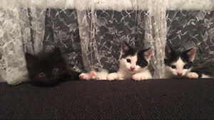 3 kittens to give away Thornbury Darebin Area Preview