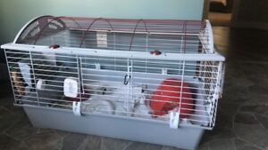 Ginnea Pig with cage and supplies