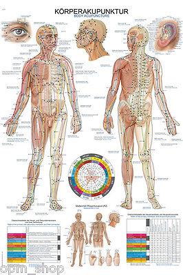 Akupunkturtafel (Anatomische Lehrtafel Körperakupunktur, Schaubild Akupunktur, Naturheilkunde)