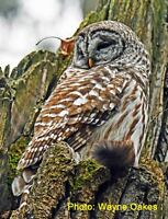 See Live Owls