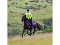 Freelance rider and Horse sitter available