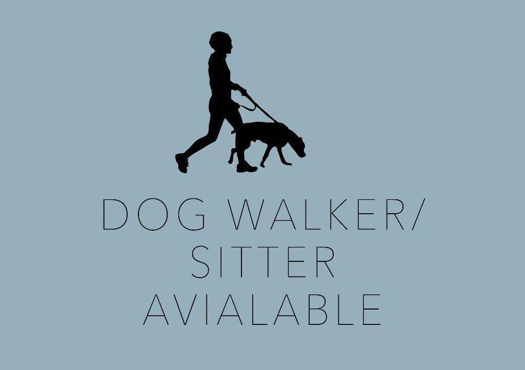 Dog Walker Sitter Available