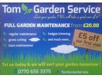 Garden service Tom garden service