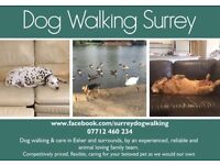 Dog Walking in Esher & Surrounds (including walking over the Christmas period)