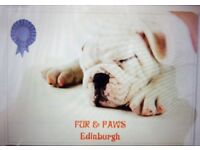 FUR & PAWS EDINBURGH