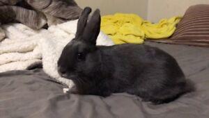 sweet bunny to good home
