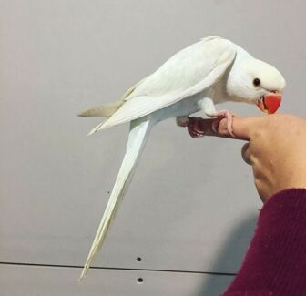 2017 bird sellout
