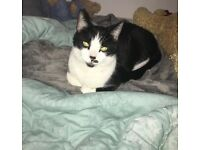 missing black and white male cat in Kemnay