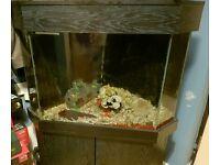 Corner Fish Tank / aquarium
