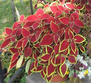 Belles Plantes pour la Maison / Lovely Indoor Plants West Island Greater Montréal image 2