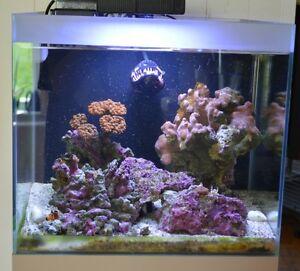 Aquarium eau de mer toute équipée