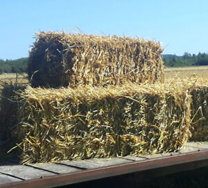 Fresh Small Bale Straw