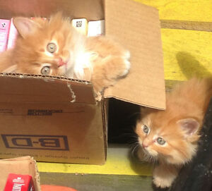Kittens - Super Cute & Ready For New Homes