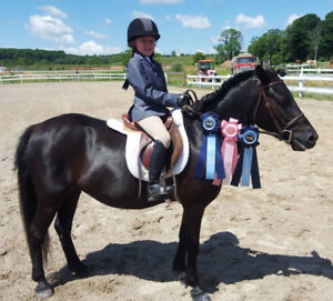 Solid, Safe Kid Pony for Lease