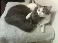 two 8 years old neutered female cats looking for a new home