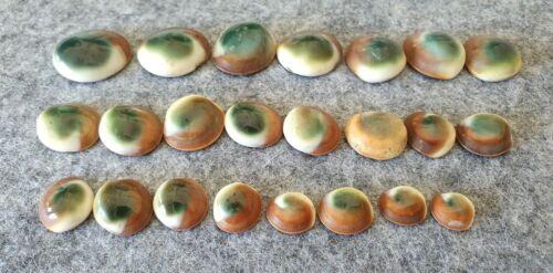 Lot Estate Cateye Fossil Shells Ammonite Craft Jewellery Curio Specimen