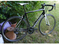 2018 Cannondale Synapse 56cm carbon road bike , Shimano Ultegra 22 speed groupset, 8kg