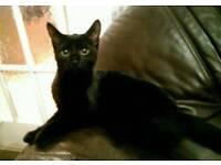 only 1 kitten left for sale