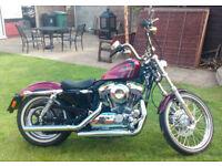 Amazing Harley Davidson XL 1200V Sportster 72 needs new loving home