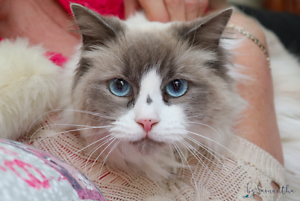 Bindi rescue CAT to adopt VET WORK INC Hamersley Stirling Area Preview