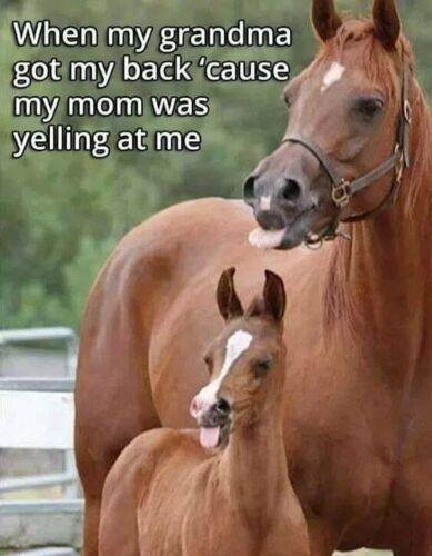 "Horse funny refrigerator magnet 3 1/2 ""X 3 1/2 """