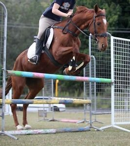 Horse needs a home Samford Valley Brisbane North West Preview