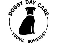 Doggy day care in the Yeovil area