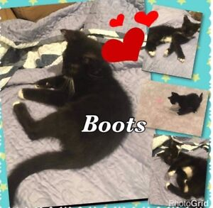 Do you have a loving home for Boots or Shadow ?