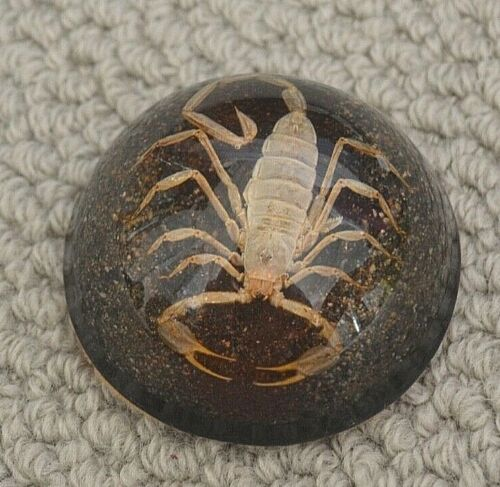 Scorpion in Resin Paperweight Half Dome
