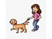Doggies Days Out -professional dog walker/ pet sitter