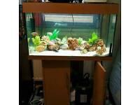 Jewel 125 fish tank with efx 200 external filter