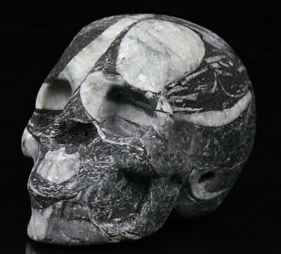 """1.9"""" Shell Stone Carved Crystal Skull, Realistic, Crystal Healing"""