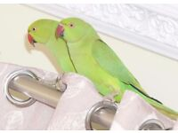 Look! Various Baby Parrots