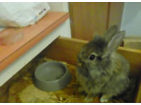 little baby bunny WE ARE IN HUDDERSFIELD!!!