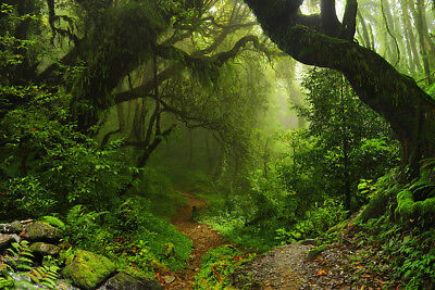 Jungle Trees Backdrop (Dark Jungle Old Forest Trees 9X6FT Vinyl Studio Backdrop Background)