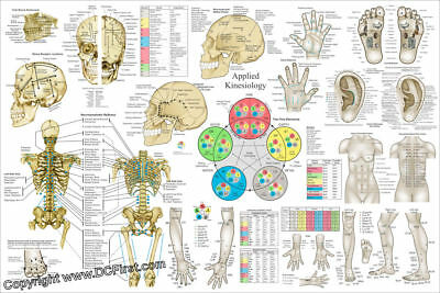 Spinal Nerves and Vertebral Subluxations Poster 24 X 36 Chiropractic Wall Chart