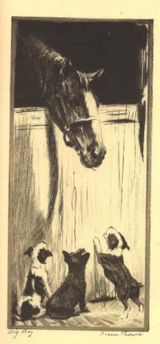 * Fox Terrier Pup - 1935 Vintage Dog Print - Diana Thorne (RARE)