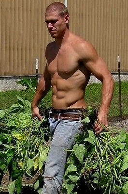 Shirtless Male Athletic Muscular Beefcake Blue Collar Worker PHOTO 4X6 D519