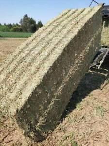 1st Cut Lucern Hay | BATHURST