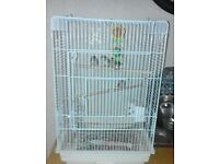 4 female zebra finches and cage