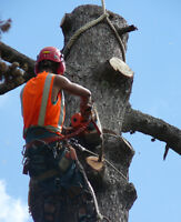 #1 Commercial & Residential Tree Removal & Pruning FREE ESTIMATE