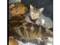 Lost cat in bexleyheath - danson park area called tabby,