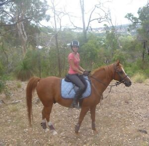 Looking for a horse to lease/ride Cooktown Cook Area Preview