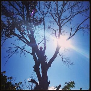 Lawn Tree And Eavestrough Services In Kitchener