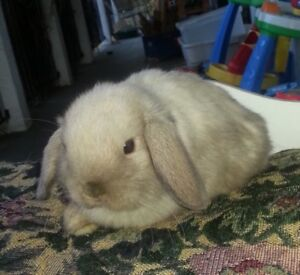 bunnies and rabbit equipment for sale