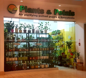 Air purifying plants at reasonable prices. low maintenance
