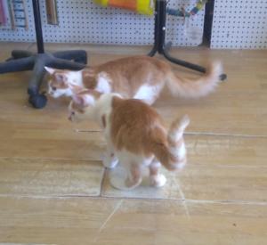 Rescue female kittens